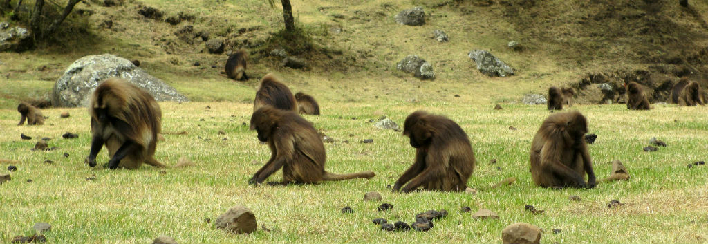 ETHIOPIA Simien Mountains hiking baboons travel africa nature wildlife